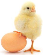 Súper Alimentos Que Ayudan A Tu Pene huevos